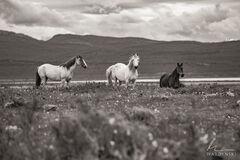 Horse Trio