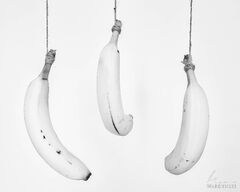 Three Hanging Bananas