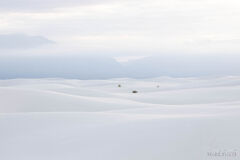 Desert Meditations