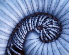 Millipede Spiral