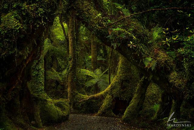New Zealand | Fine Art Photography