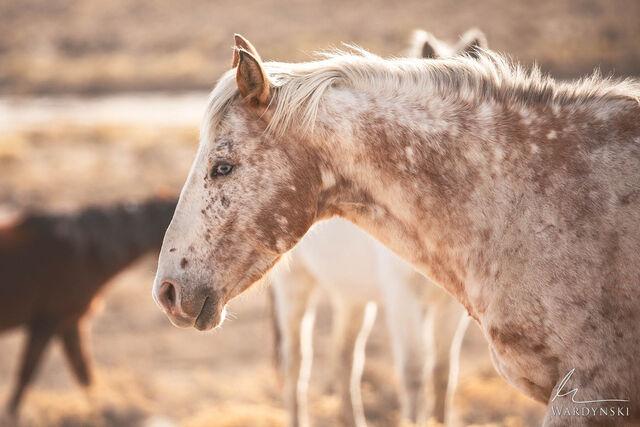Wild Horse Insight