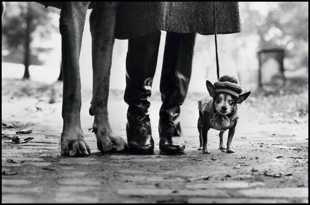 elliot-erwitt-dogs