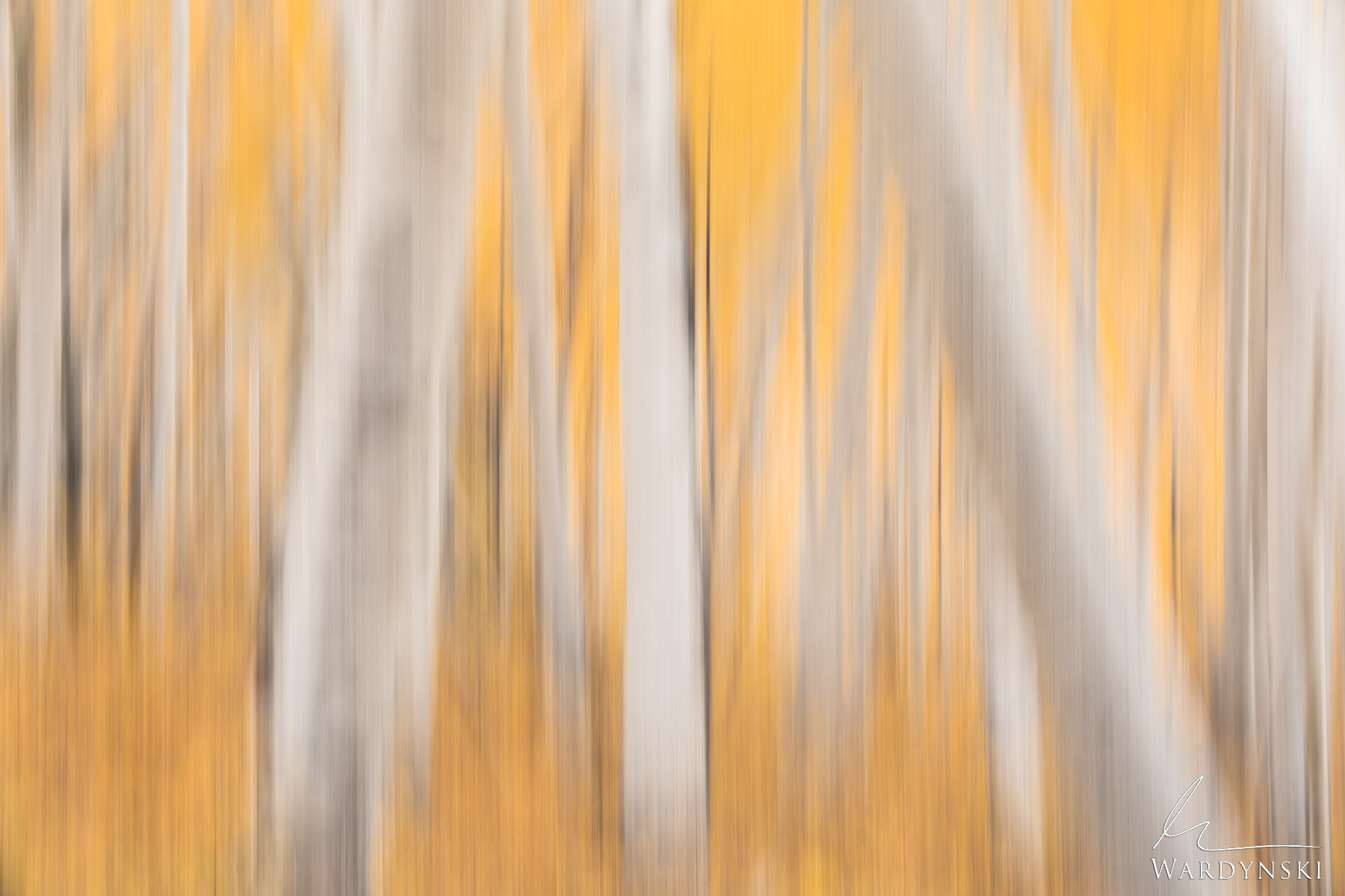 Fine Art Print | Limited Edition of 50  This abstract photograph of aspen trees was created by intentionally moving the camera...