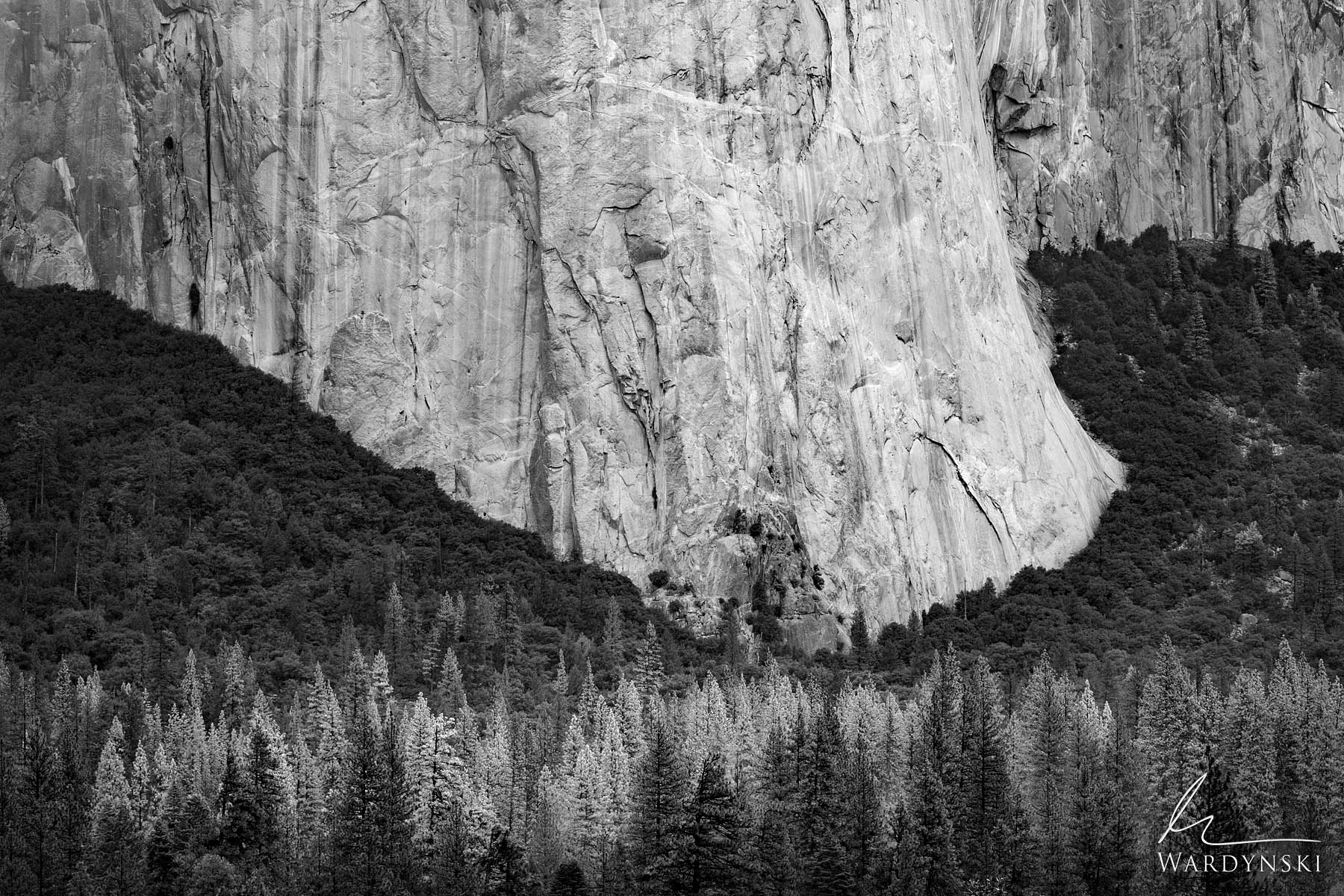 Fine Art Black and White Print - Limited Edition of 25  Like the foot of a giant, the nose of El Capitan dwarfs the trees surrounding...