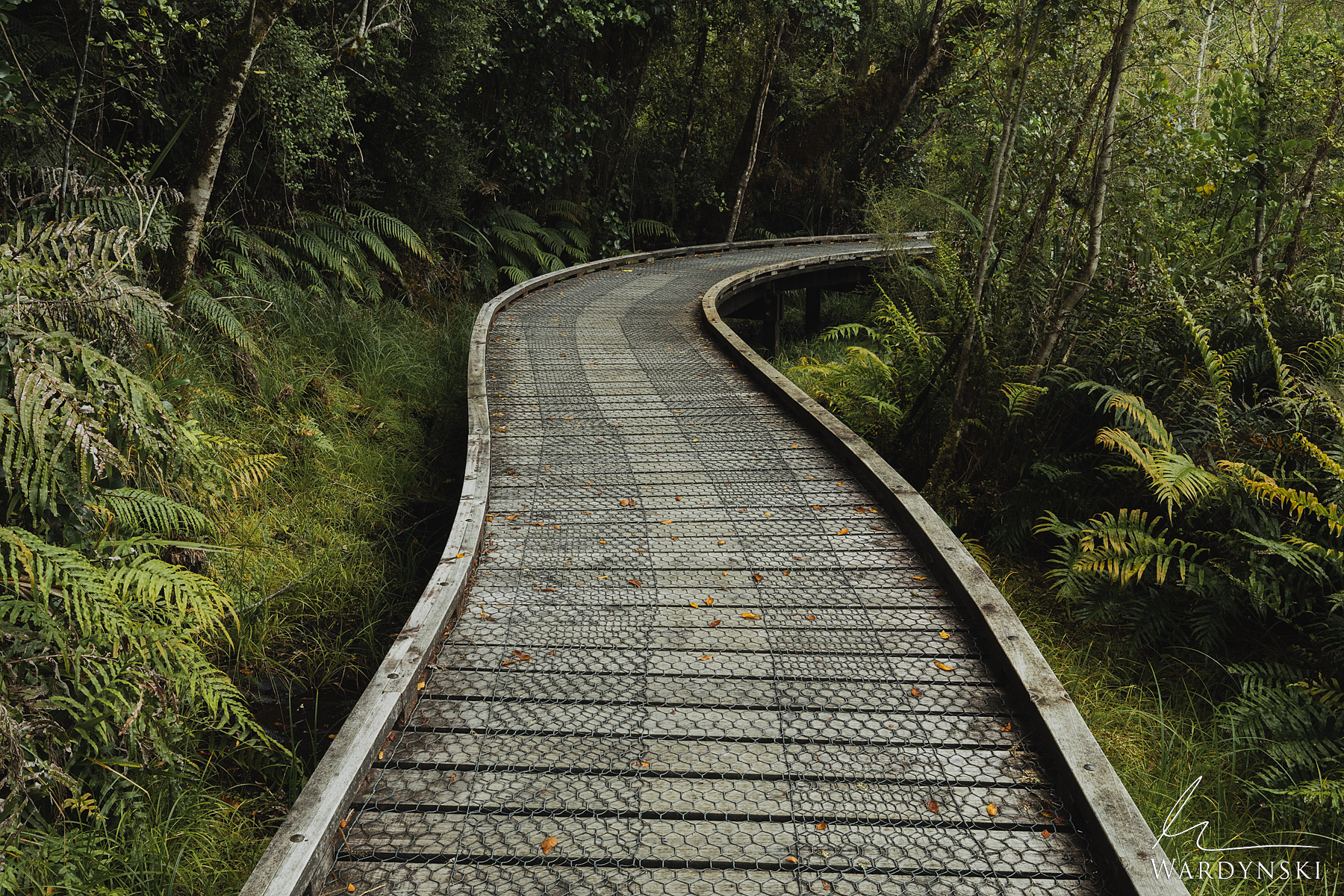 Fine Art Print | Limited Edition of 25  The New Zealand rain forests are world renowned trekking destinations that captivate...