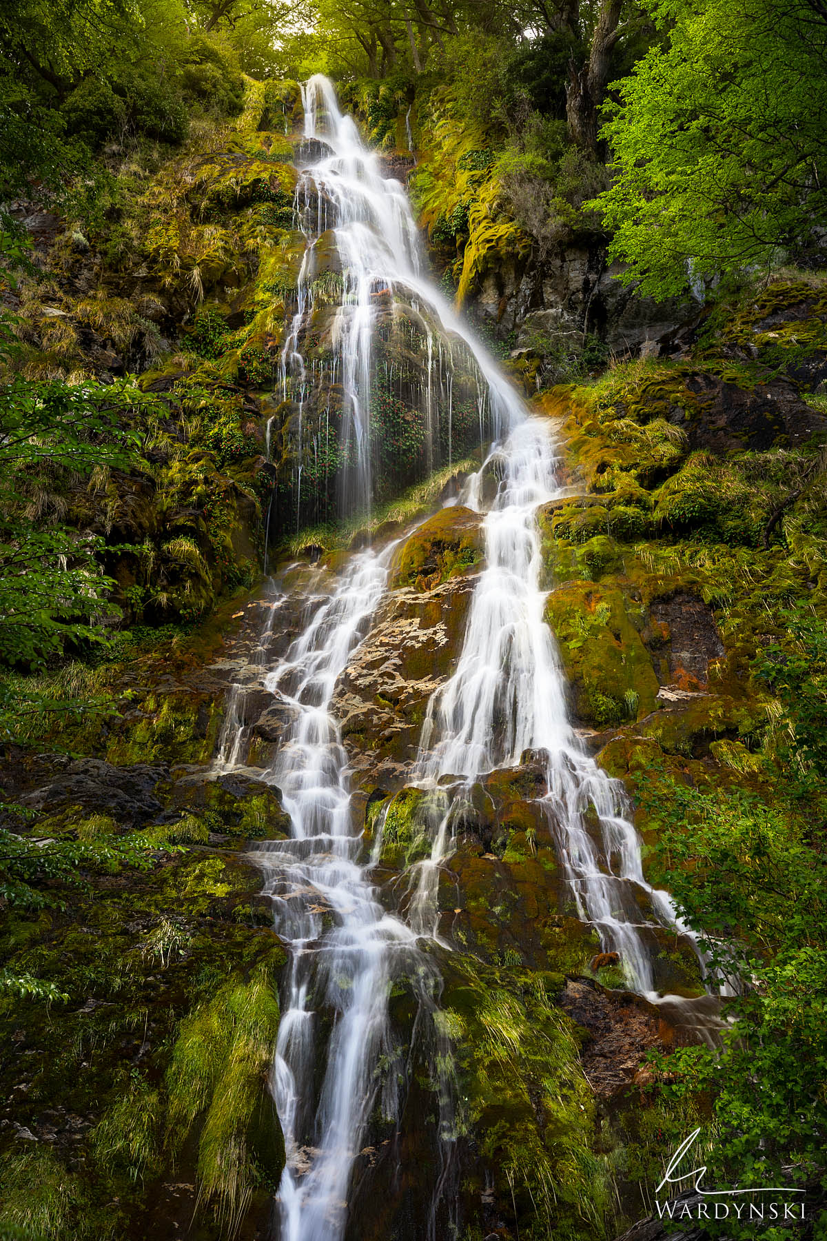 Fine Art Print | Limited Edition of 100  Salto de Anillo braids its way down a lush moss covered wall just outside of El Chalten...