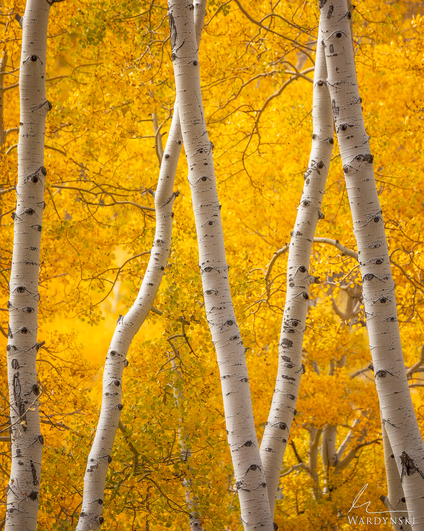 Fine Art Print | Limited Edition of 50 There are few places in the west that put on a better fall display than the mountains...