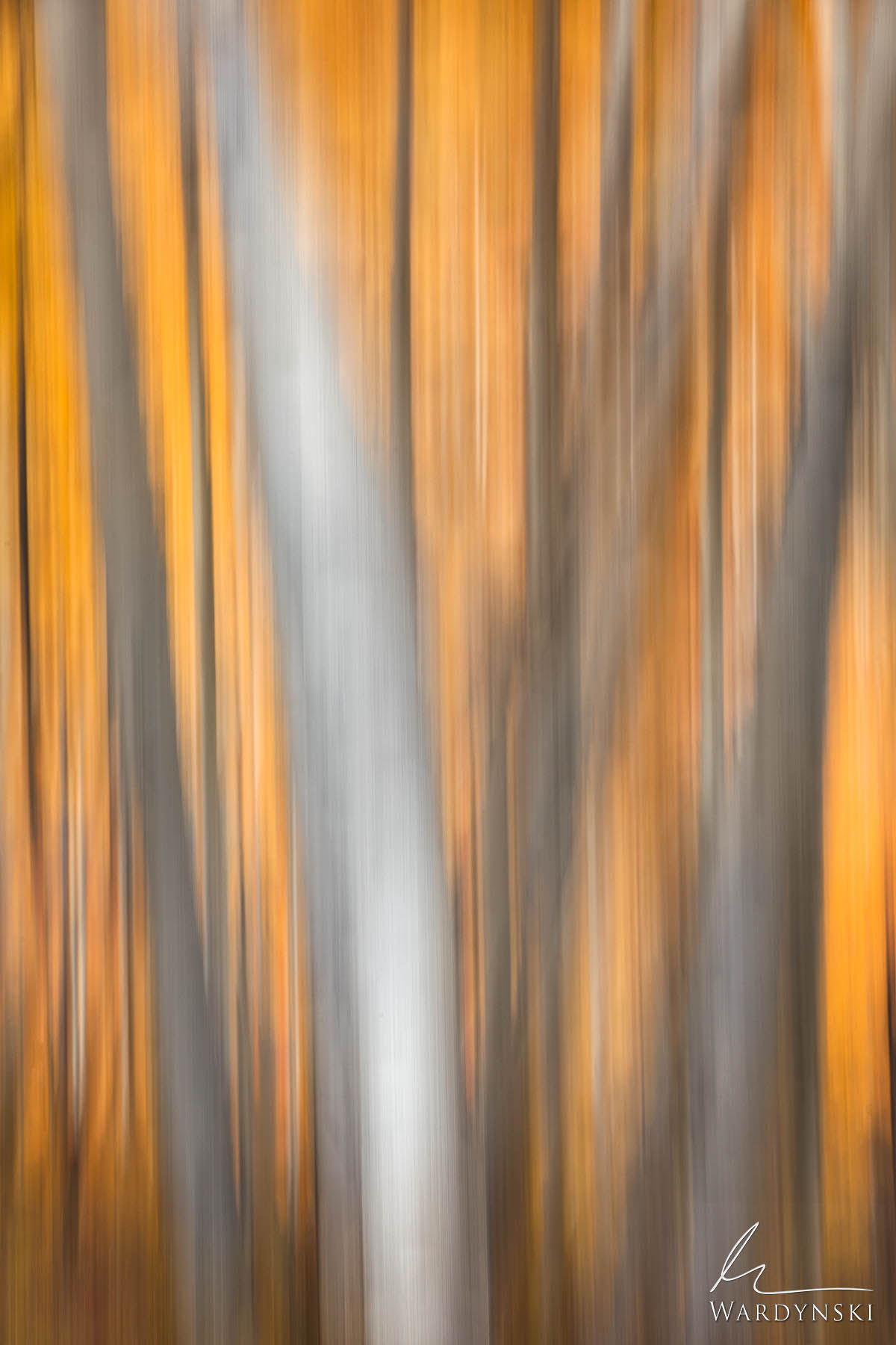 Fine Art Print | Limited Edition of 25  Autumn in Colorado is a spectacular sight to see. The yellow, gold, and orange aspen...