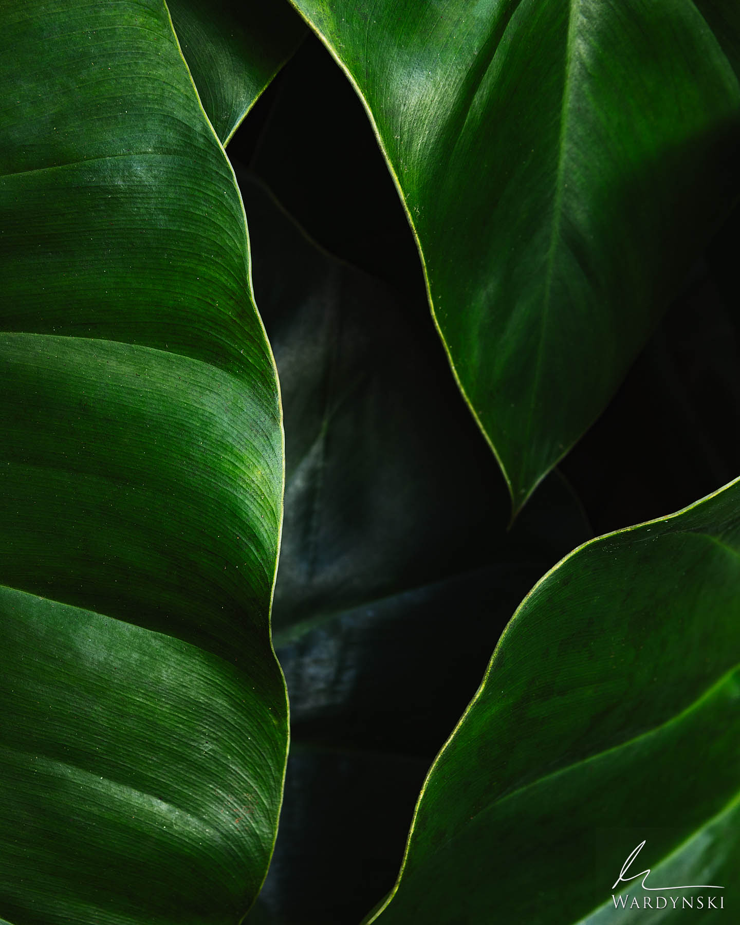 Fine Art Print | Limited Edition of 35  Green is the color of life, renewal and energy. It represents growth and is commonly...