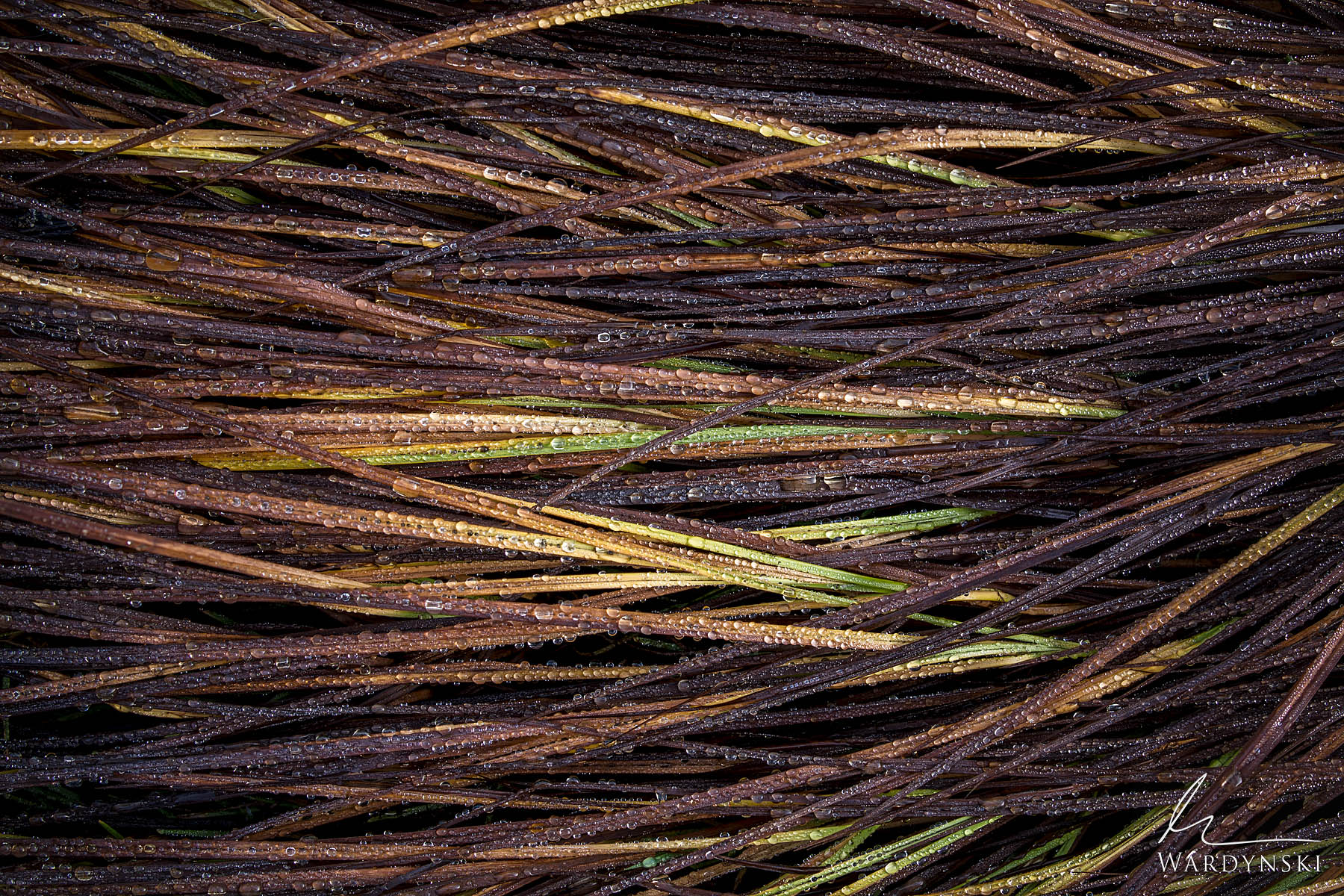 Fine Art Print | Limited Edition of 25  Tufts of river grass collect drops of dew on a chilly autumn morning in Yosemite Valley...