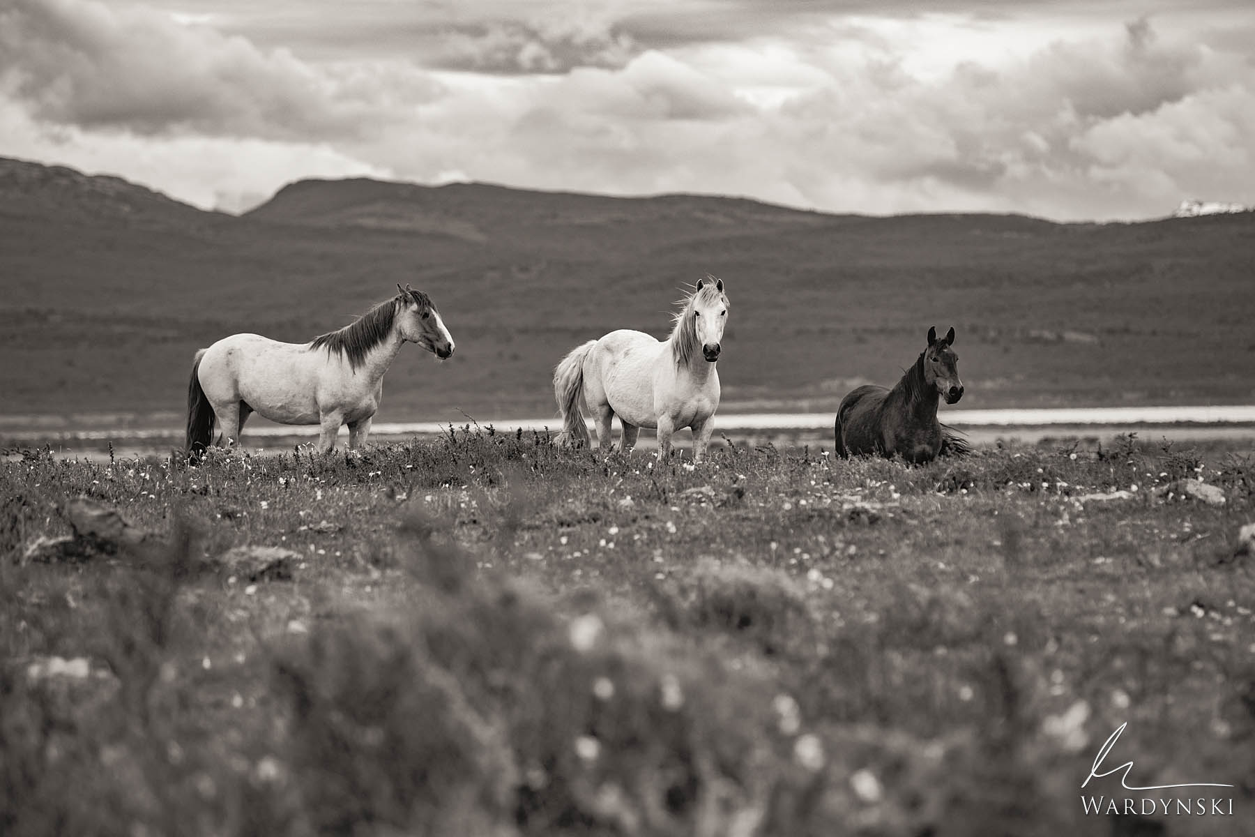 Sepia Fine Art Print | Limited Edition of 35  A trio of wild horses stand in an open pasture in Patagonia near the town of Puerto...