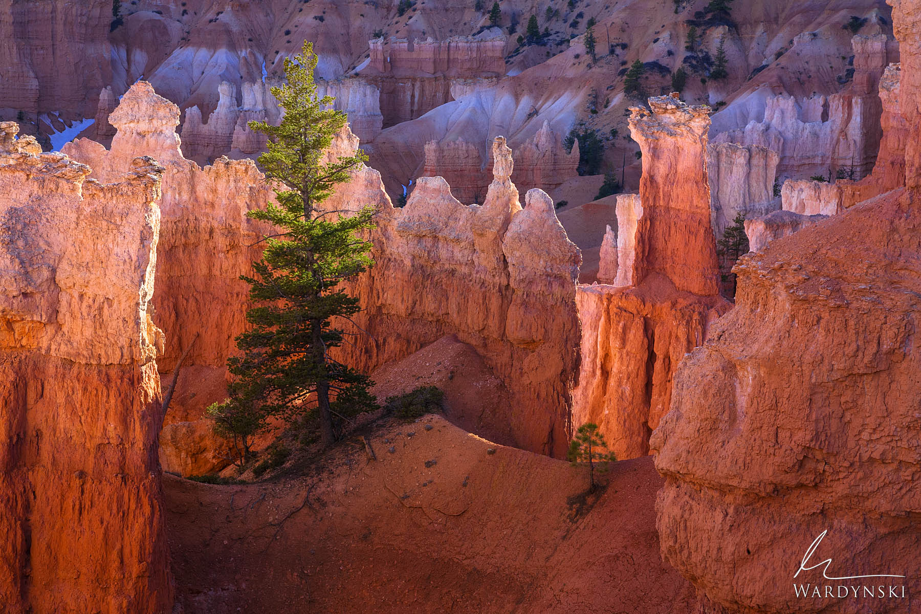 Fine Art Print | Limited Edition of 50 A lone pine tree rests precariously on the edge of Bryce Canyon. Bryce is one of the strangest...