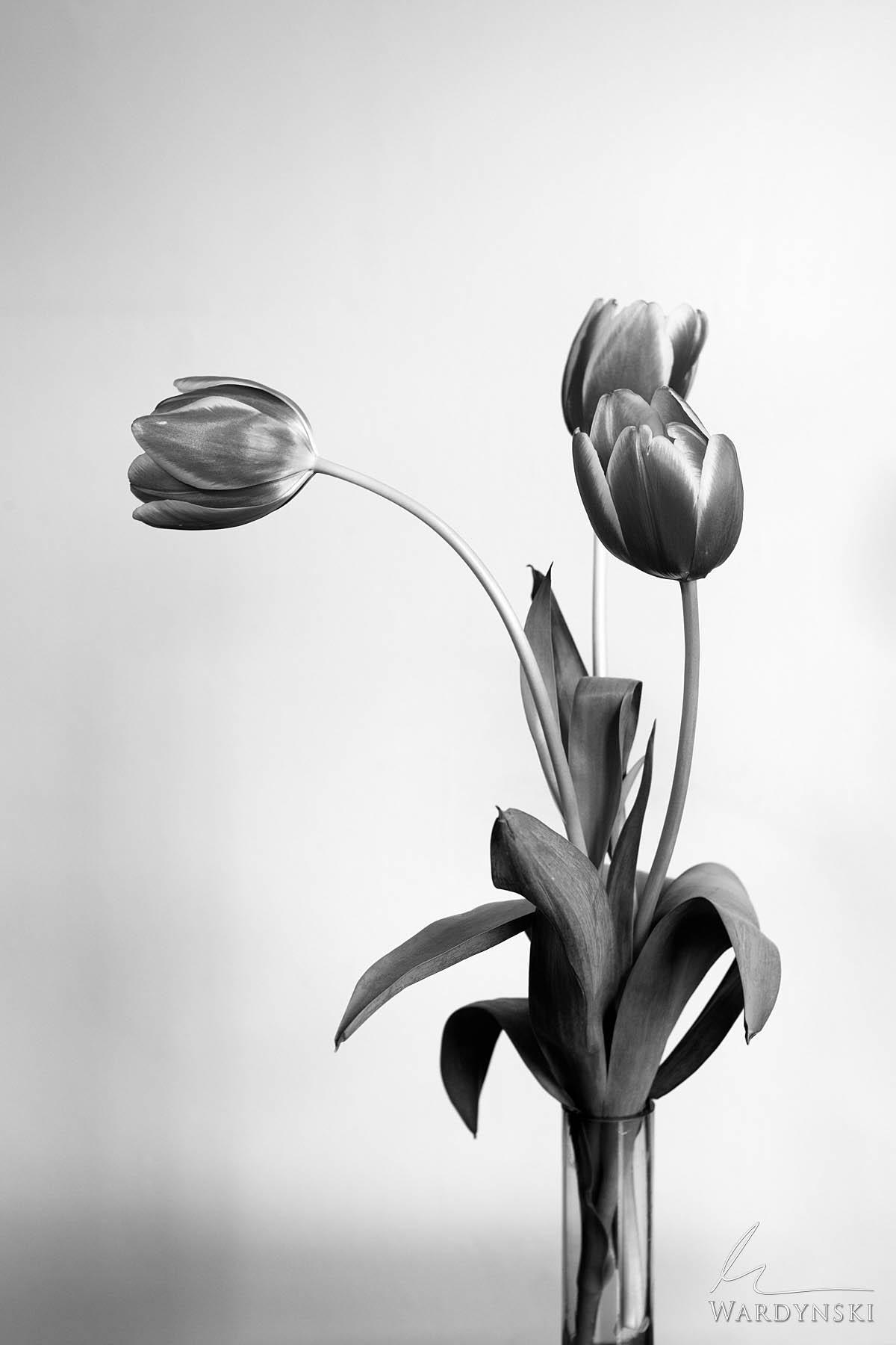 vertical, black and white, b&w, monochrome, flower, high key