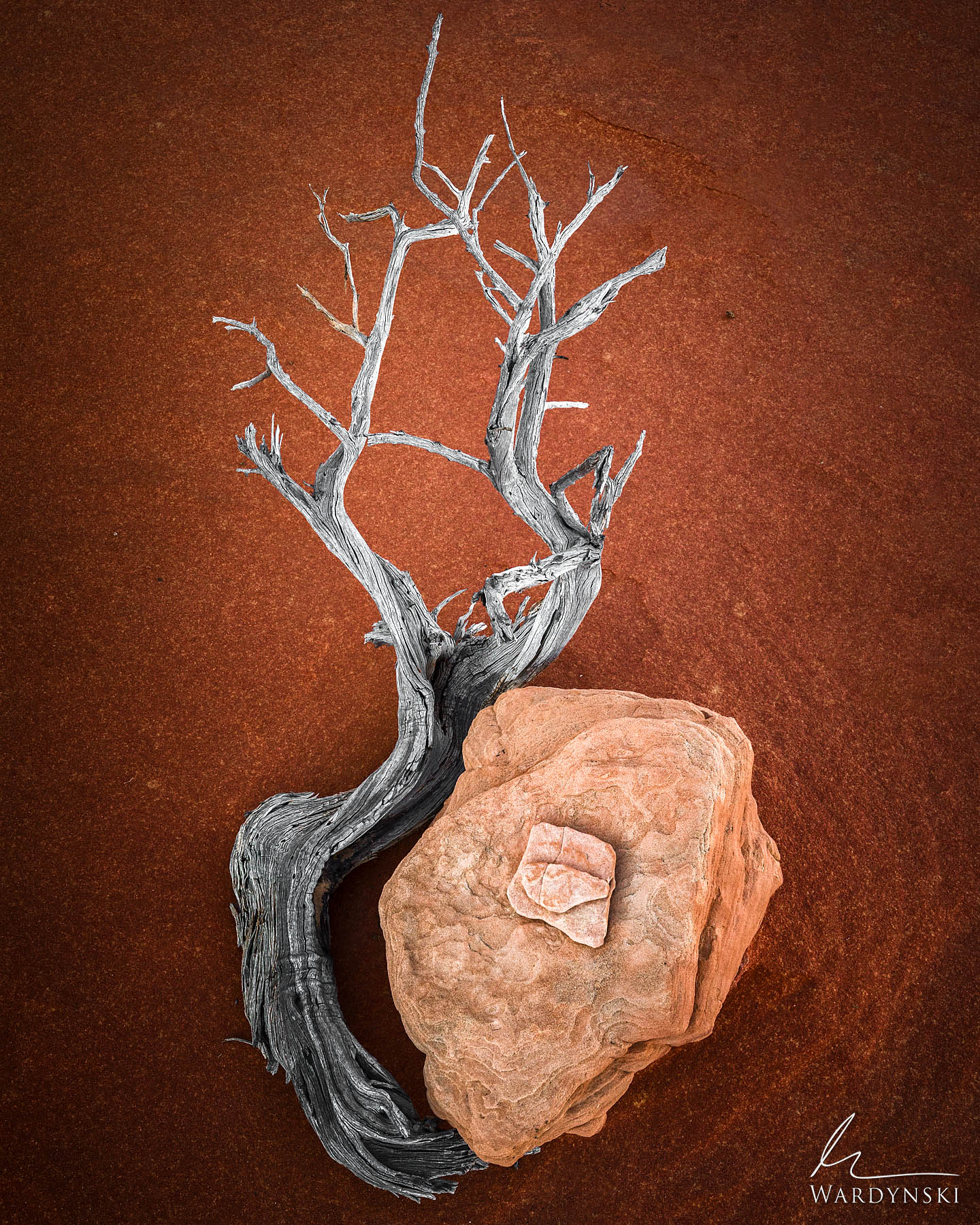 Fine Art Print | Limited Edition of 50 Like pieces of a puzzle, a sandstone rock fits into the curve of a dry branch on the desert...