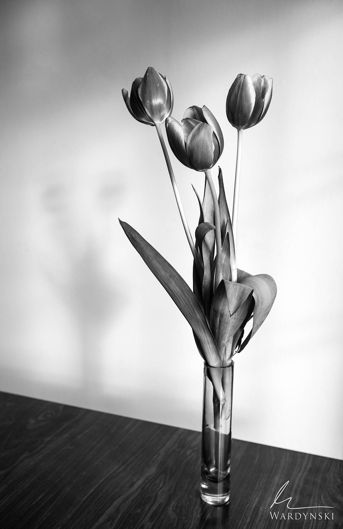 vertical, black and white, b&w, monochrome, flower