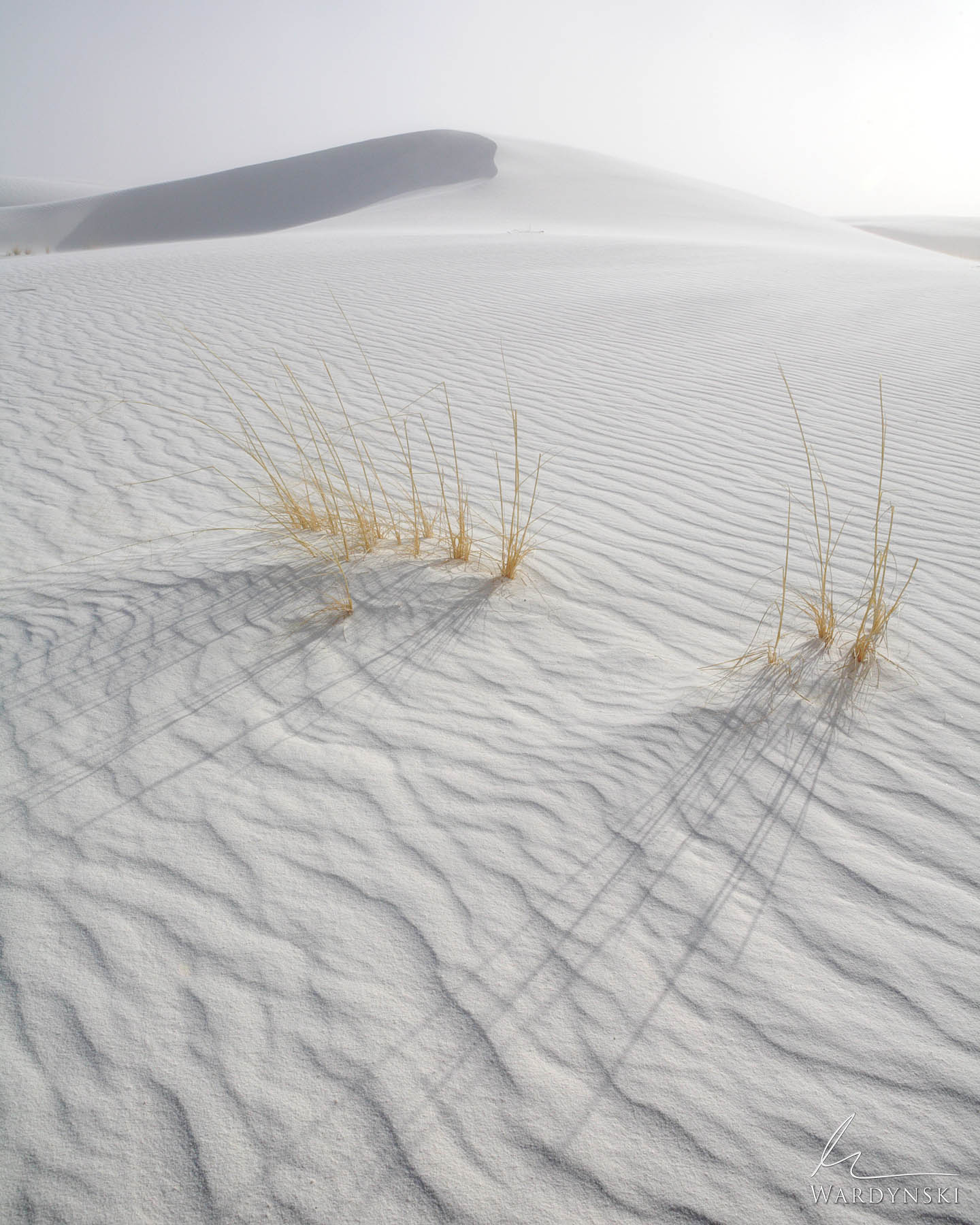 Fine Art Print | Limited Edition of 100 Little Bluestem Grass pokes out of rippled white sand at White Sands National Park in...
