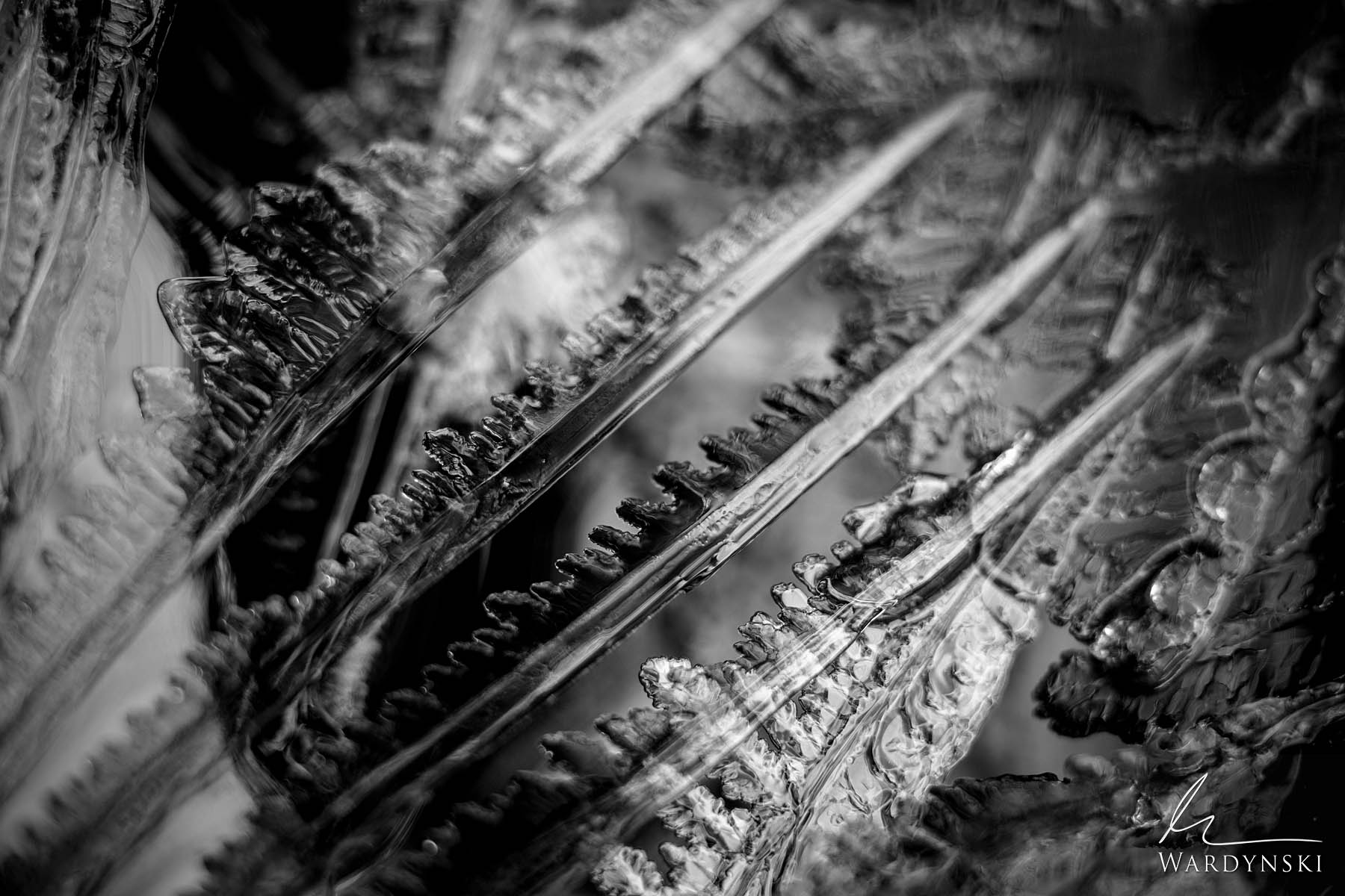 Black and White Fine Art Print | Limited Edition of 100  Serrated ice crystals grow out of Bridalveil creek on a cold winter...