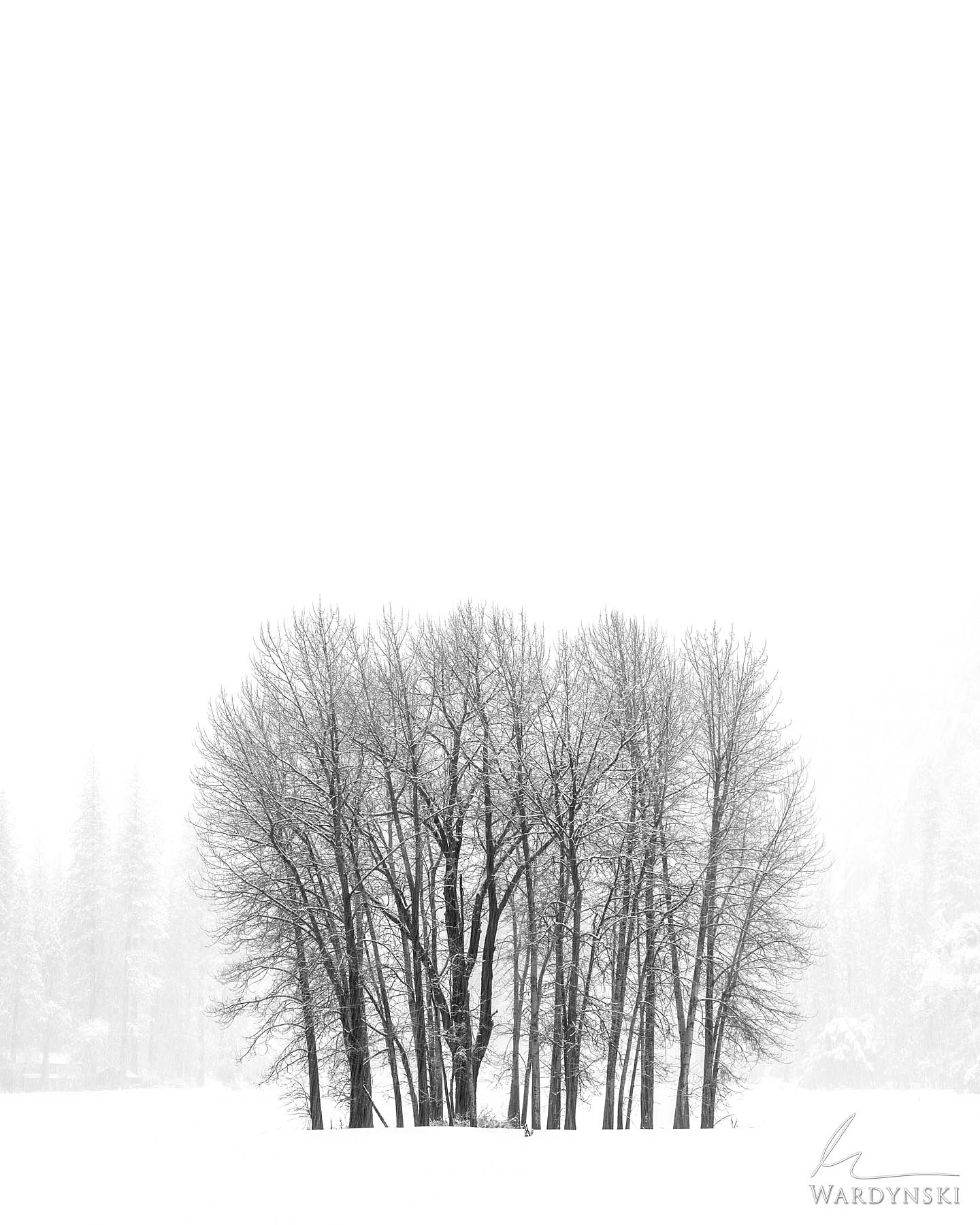Fine Art Print | Limited Edition Print of 200  When fat fluffy snow flakes fall from the Yosemite sky I cannot help but smile...