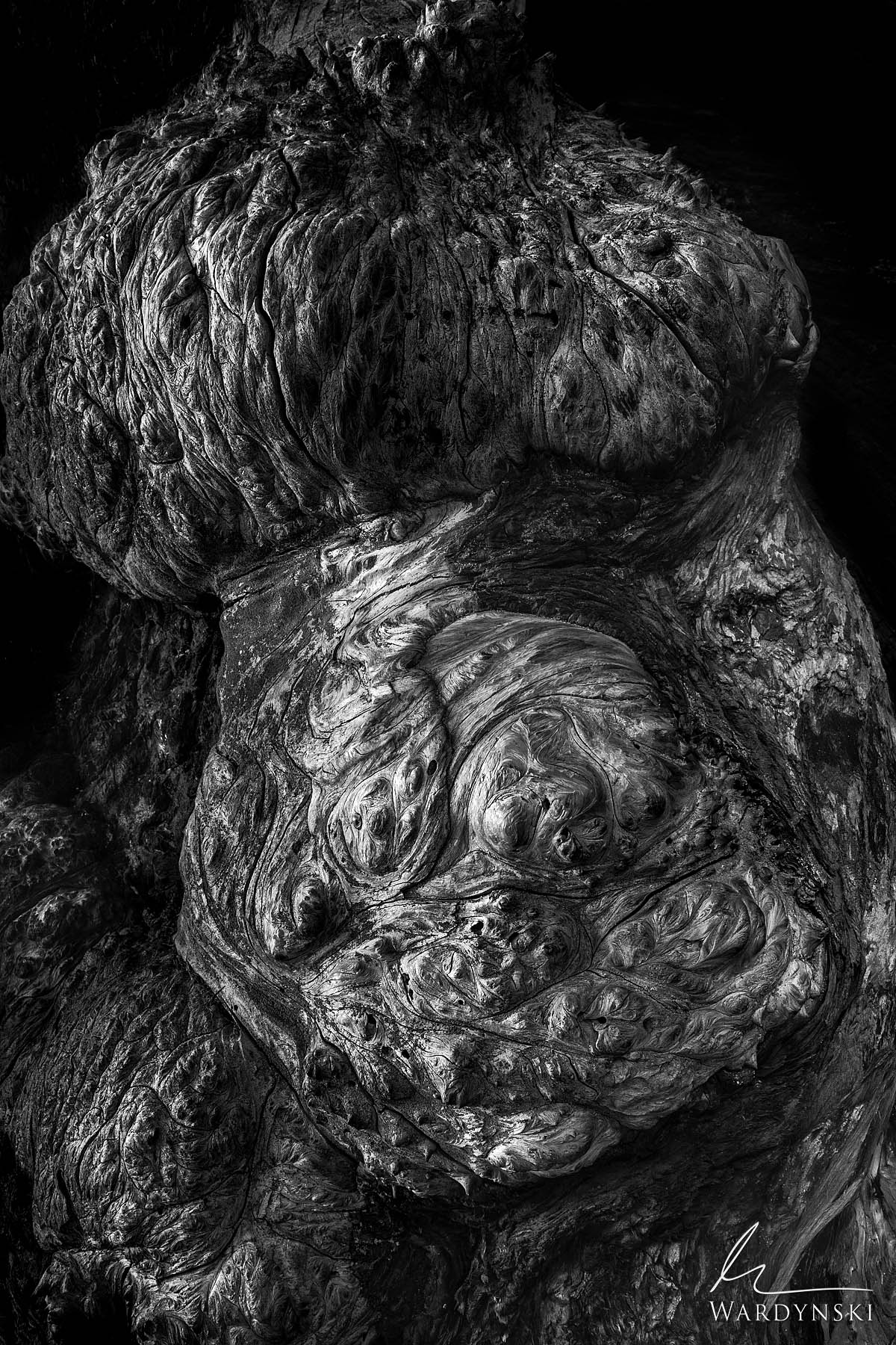 Black And White Fine Art Print   Limited Edition of 25  A burl on a Sequoia tree takes the form of a pregnant woman in Yosemite...