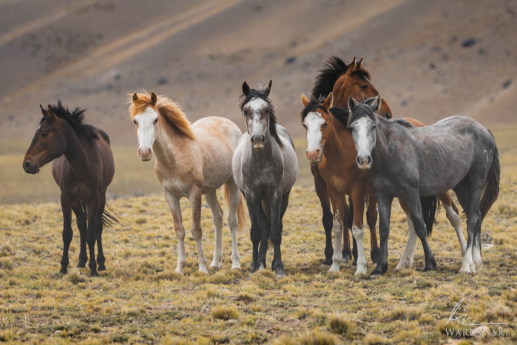 Fine Art Print | Limited Edition of 50  If there ever was an alternative rock group to be created by wild horses, these would...