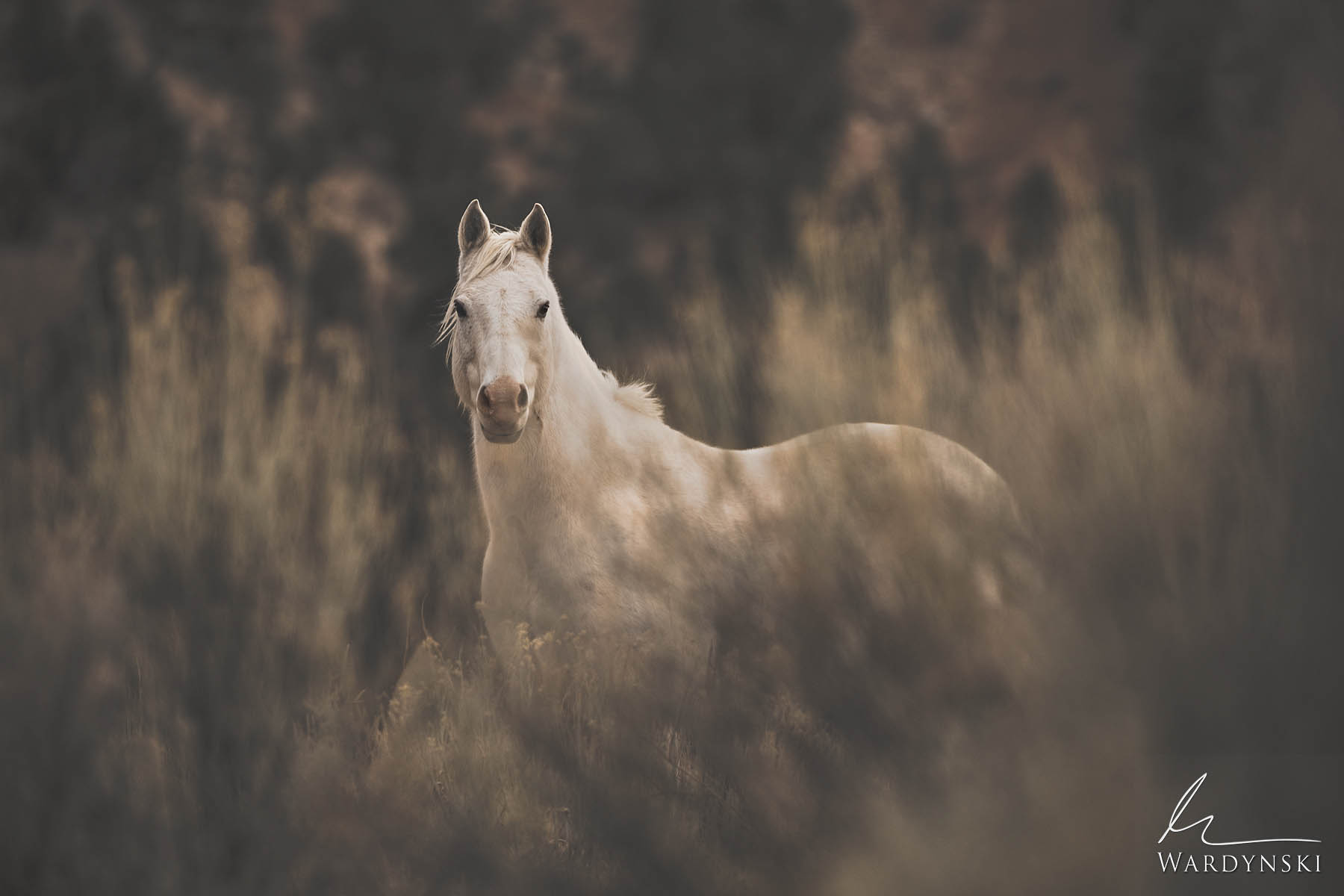 Fine Art Print | Limited Edition of 35  Seeing a wild horse in a natural environment is certainly worth taking a moment to sit...