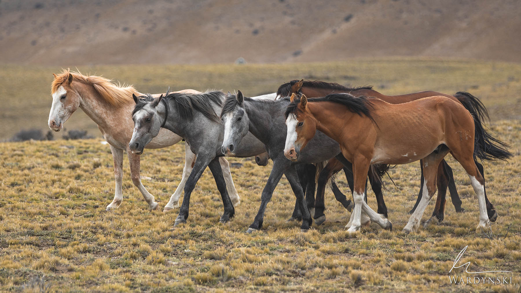 Fine Art Print | Limited Edition of 35  A group of wild horses march on the open plains of Patagonia near the town of El Calafate...