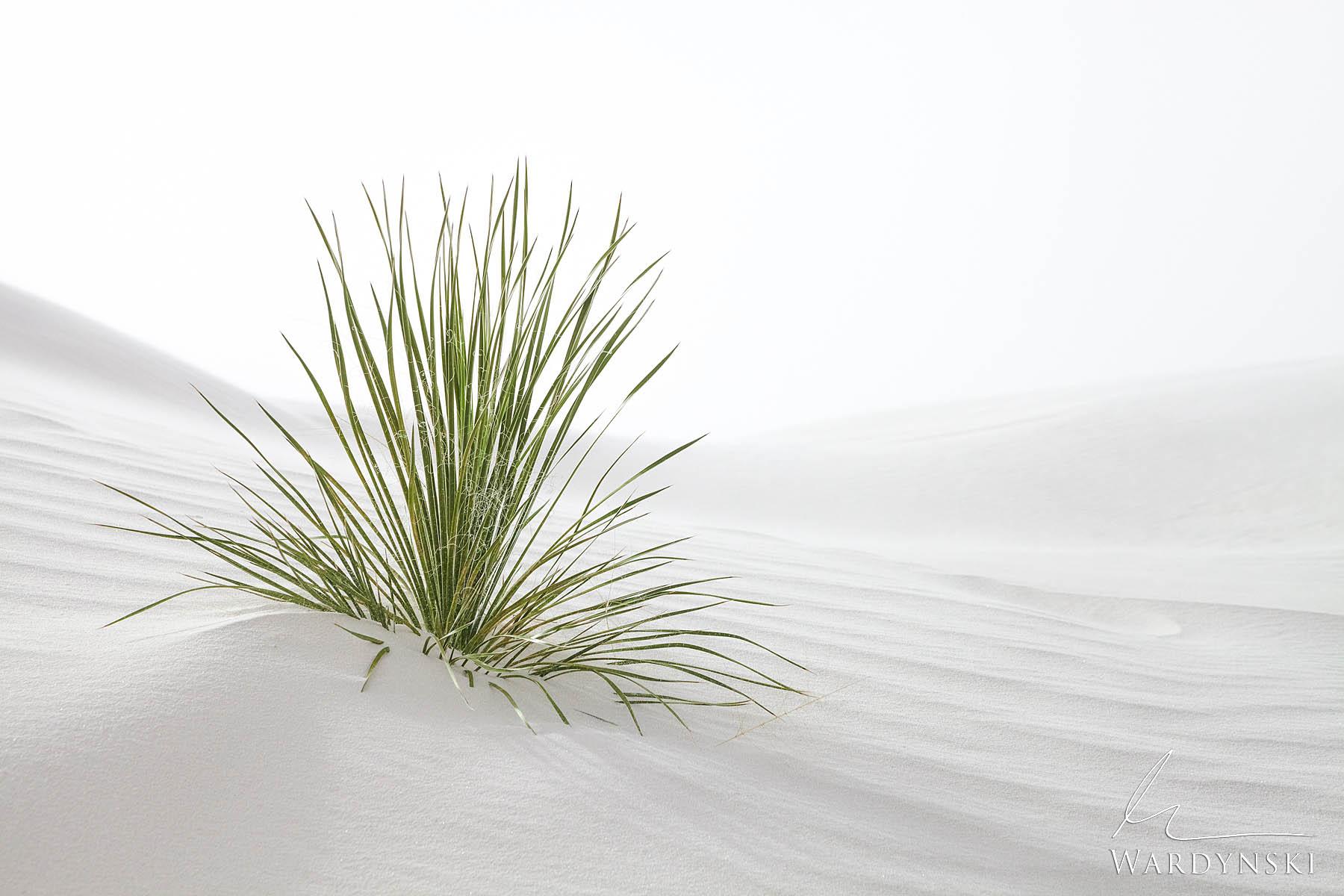 Peaceful Dunes